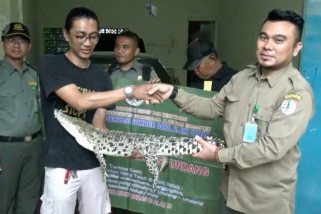 BKSDA Serang evakuasi buaya muara yang dilindungi