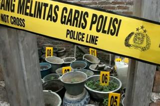 Nekat tanam ganja, dua orang warga Bandung ditangkap polisi