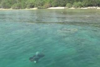 Lanal Banten lakukan transplantasi terumbu karang