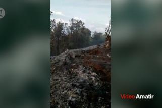 Kebakaran terjadi di puncak Gunung Batukaru Bali