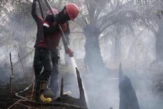 Penanggulangan karhutla Riau libatkan 5.800 personel gabungan
