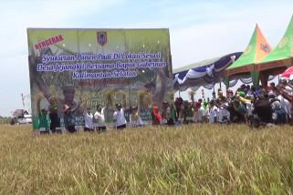 Segerakan panen antisipasi kebakaran di lahan pertanian