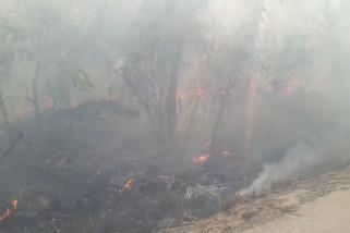 Api kembali lalap 6 hektare lahan di Balikpapan