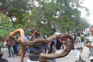 Pameran bonsai hiburan alternatif yang mengedukasi