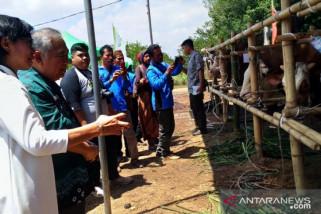 Antara TV - Integrasi Sapi-Sawit di Bangka Belitung