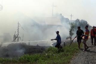Ratusan hektare lahan pertanian di Kalsel terbakar