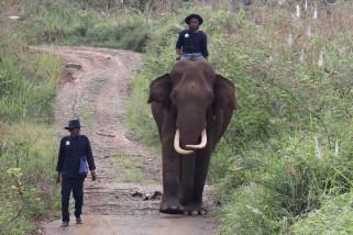 Tim CRU Das Peusangan patroli bersama gajah jinak