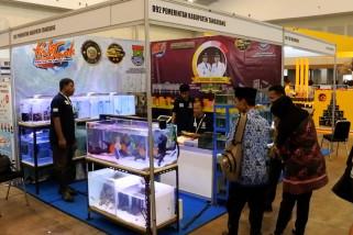 Nusatic 2019 ajang tampil pelaku budidaya ikan hias dari Tangerang