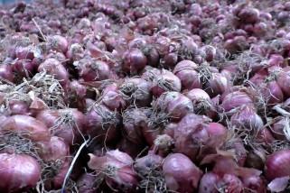 Petani bawang merah diuntungkan dengan penggunaan bibit biji