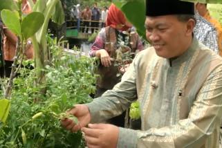 Tekan laju inflasi dengan program Kampung Berkebun
