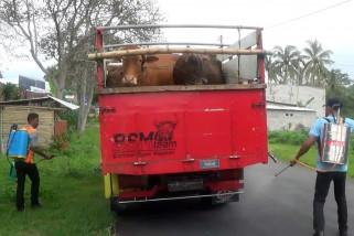 Dinas Peternakan Magetan perketat pintu masuk hewan ternak
