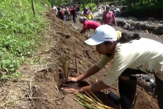 Kodim 0824 Jember tanam rumput vetiver di daerah rawan banjir bandang