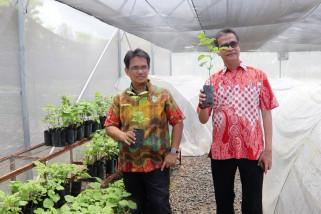 Nilam Aceh kian harum hingga ke pasar dunia