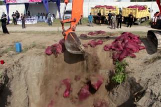 18 ton bawang merah ilegal asal Thailand dimusnahkan
