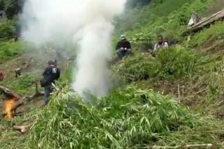 BNNP Sumut musnahkan 8 hektar ladang ganja milik warga