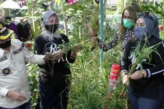 Mendongkrak roda ekonomi masyarakat dengan tanaman toga