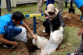 Ditpolair Polda Kalbar musnahkan ribuan butir telur penyu