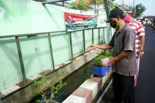 Cegah nyamuk bersarang, warga fungsikan selokan jadi kolam ikan