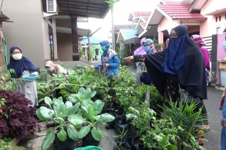 Manfaatkan pekarangan untuk penuhi kebutuhan pangan