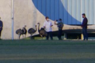 Bolsonaro bercengkerama dengan burung besar di pekarangan Alvorada