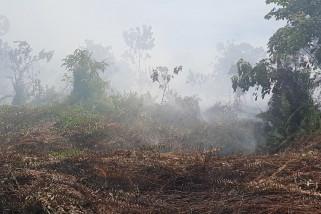3 hektare lahan gambut di Kubu Raya terbakar