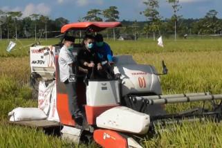 Sektor pertanian penyelamat pertumbuhan ekonomi di masa pandemi