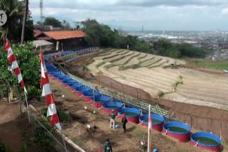 Bandung miliki kawasan pertanian terpadu untuk ketahanan pangan