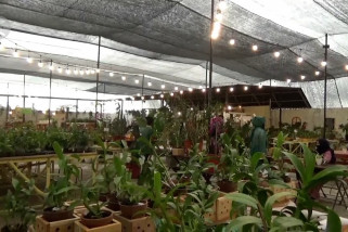 Kebun anggrek, menjadi pilihan berwisata di masa pandemi