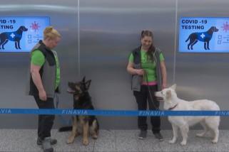 Bandara Helsinki kerahkan anjing pelacak COVID-19
