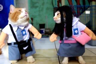 Busana khusus kucing yang lucu