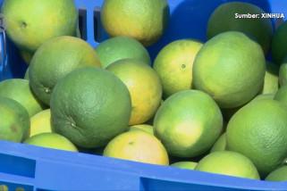 Penduduk desa di China tengah ubah bukit tandus jadi basis perkebunan jeruk navel