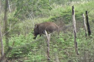Desa Karang Ampar yang kini berdampingan dengan gajah