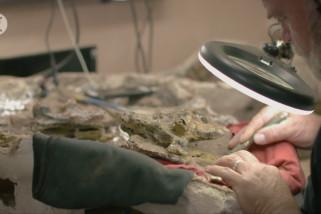 Museum terbesar Australia akan terima fosil dinosaurus paling utuh di dunia