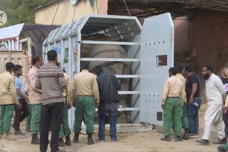 Gajah Asia satu-satunya di Pakistan akan nikmati hari tua di Kamboja