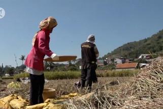 Jawa Barat siapkan strategi antisipasi krisis pangan di 2021