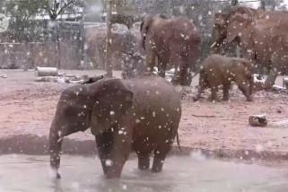 Gajah girang bermain di tengah guyuran salju di Arizona