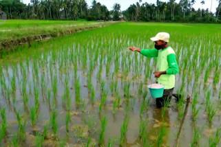Pemkab Aceh Utara berikan 3 cara atasi kelangkaan pupuk subsidi