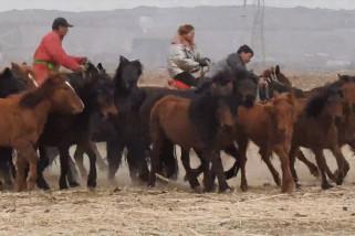 Para penggembala beri suntikan obat cacing untuk kuda di China utara