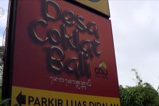 Desa Coklat Bali ajak wisatawan mengolah cokelat dari pohonnya
