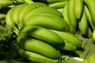 Angkat perekonomian petani dengan kembangkan kebun pisang Cavendish