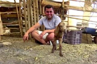 Di kebakaran hutan Turki, dua bayi kambing lahir selamat