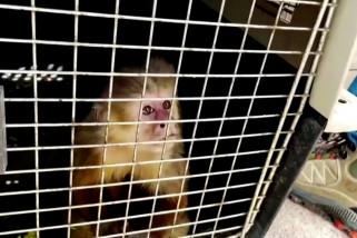 Kolombia selamatkan 100 hewan dari pasar gelap