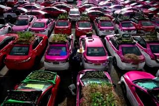 Garasi taksi Thailand diubah menjadi kebun sayur