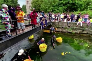 Keseruan balapan bebek karet di Canterbury
