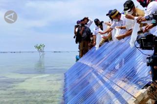 Menteri KKP akan jadikan Belitung Timur daerah budi daya kerapu