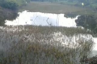 Jambi janjikan bantuan benih untuk lahan padi terendam banjir