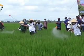 Pemkab Jember memulai gerakan OPT Pestisida Hayati