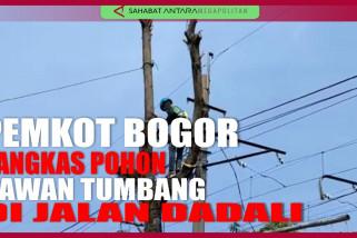 Pemangkasan pohon di Kota Bogor