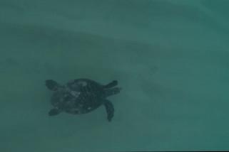 Menyelami keanekaragaman hayati laut Meksiko